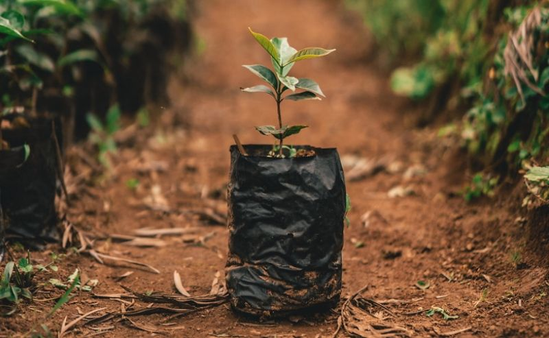 Feature-Image---Our-Commitment-to-Sustainability