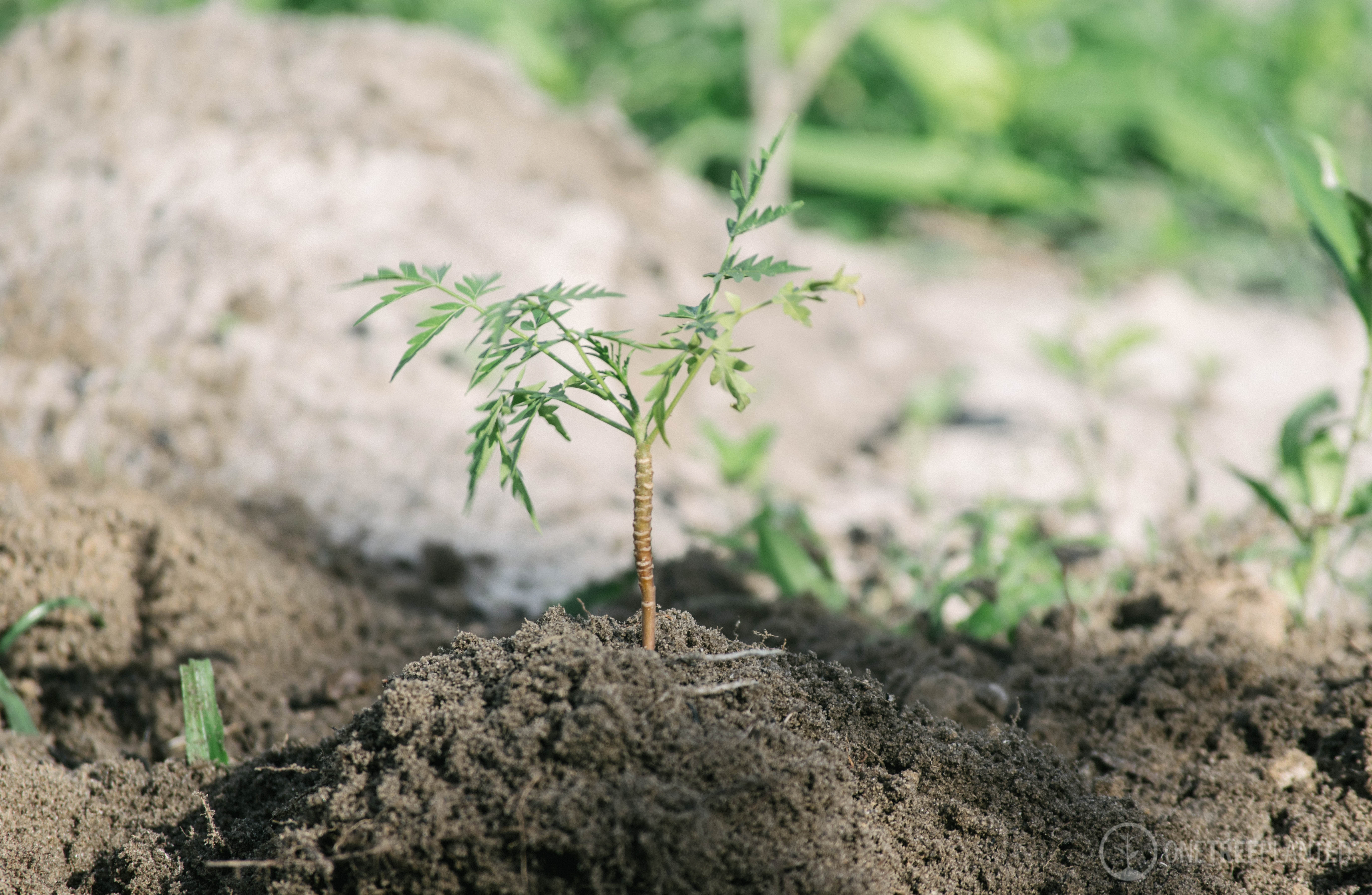 One-Tree-Planted-21