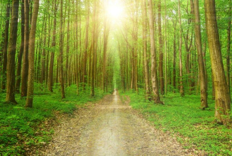 blog-feature---one-door-one-tree